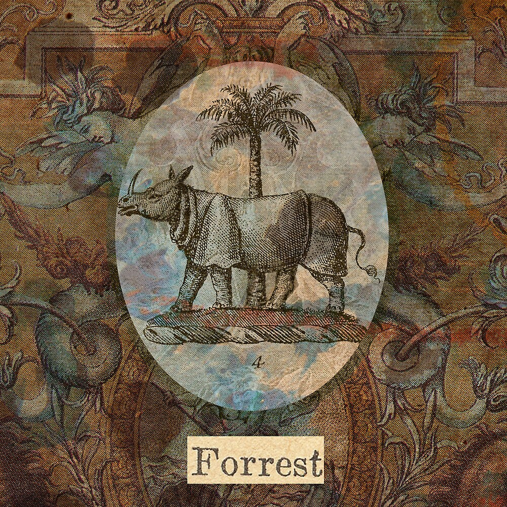 Forrest by Jay Reed