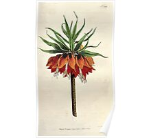 The Botanical magazine, or, Flower garden displayed by William Curtis V5 v6 1792 1793 0106 Fritillaria Imperialis, Crown Imperial Poster