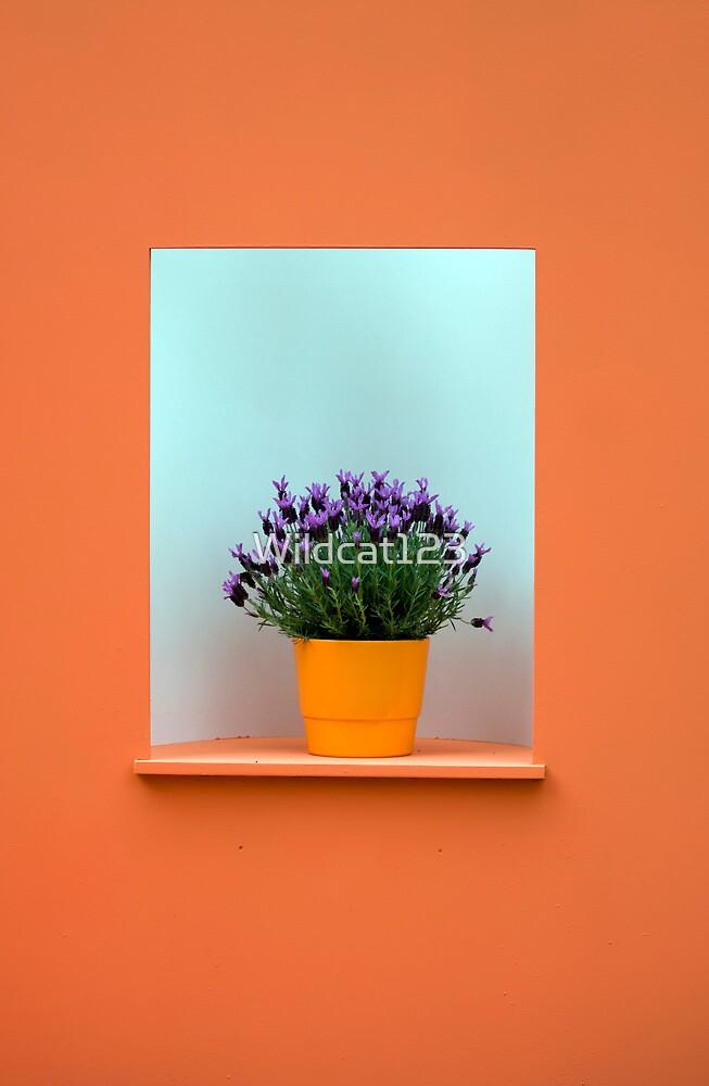 Framed by Wildcat123