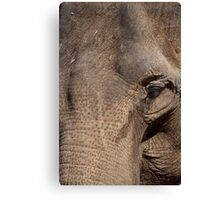 Wise Canvas Print