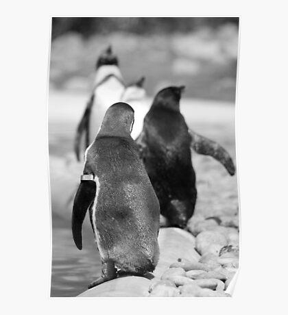 Penguin Walk Poster