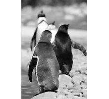 Penguin Walk Photographic Print