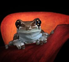 Cute milk frog by Angi Wallace