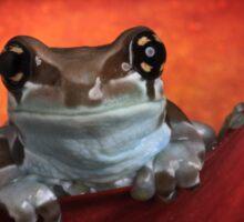 Cute milk frog Sticker