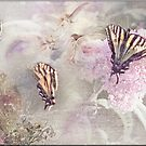Butterfly Fairies by Crista Peacey