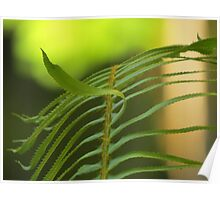 Fern, Gifford Pinchot National Forest Poster