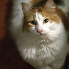 Family Cat- Catertens by Colleen Rohrbaugh