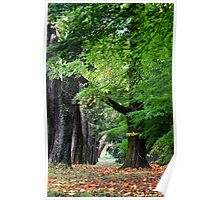 Mt Wilson NSW - Autumn Avenue Poster