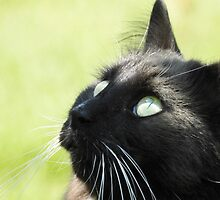 Green Eyed Cat by PeggCampbell