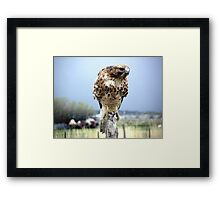 Curious, What's On the Menu?  Framed Print
