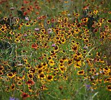 Wildflowers in bloom by JLew