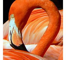 Flaming Flamingo Photographic Print