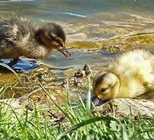 Blonde and Brunette Ducklings  by lynn carter