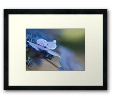Soft Blue Moment Framed Print