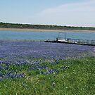 Bluebonnets at Edge of Lake Buchannan by icesrun