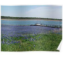 Bluebonnets at Edge of Lake Buchannan Poster