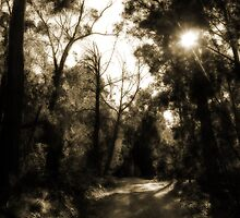 Road In Sepia by Evita