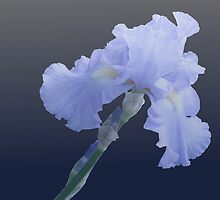 For the Love of Iris by Tony Wilder