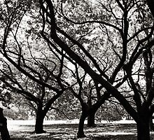 Trees of Harajuku  by Ethna Gillespie