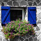 Goat  Cottage Window by Darlene Lankford Honeycutt