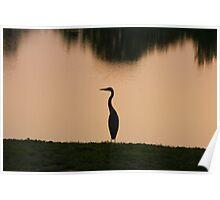 Great Blue Heron - Dusk Poster