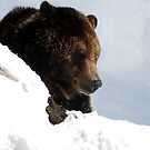 bear by Michael Lane