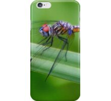 Dragonfly - Little Miami iPhone Case/Skin