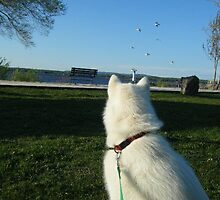 Sitka - Dog's Eye View of the Seaguls.  by LenniluvsBrian
