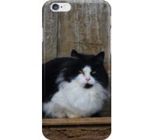 Orphaned - Barn Cat iPhone Case/Skin