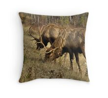 Watchful Eye - Banff National Park Throw Pillow