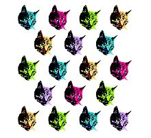 All of the Electric Tabby Faces Photographic Print