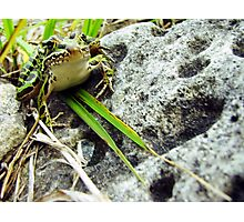 Life of a Frog Photographic Print