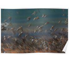 Flurry of Birds Poster