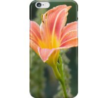Hemerocallis lilioasphodelus iPhone Case/Skin