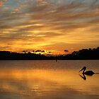 Sunrise over Narrabeen Lake + Pelican by Doug Cliff