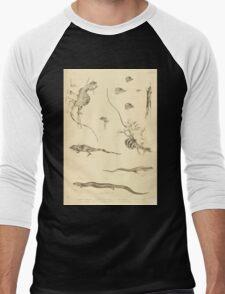 The Reptiles of British India by Albert C L G Gunther 1864 0505 Many Lizards Men's Baseball ¾ T-Shirt