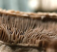 Mushrooms have Radiators by ionclad