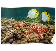 Starfish underwater over coral with butterflyfish Poster