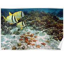 Coral reef with tropical fish and a group of starfish Poster