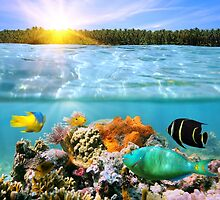 Sunset and colorful underwater marine life by Dam - www.seaphotoart.com