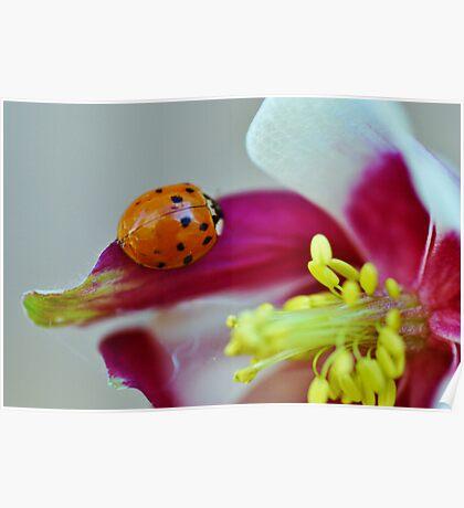 Ladybug. Poster