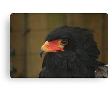 large Bird of Prey Canvas Print