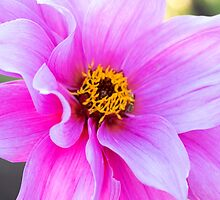 Pink Flower by pinkT
