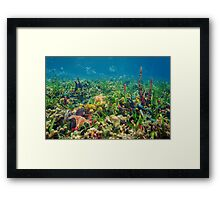 Thriving underwater marine life on tropical seabed Framed Print