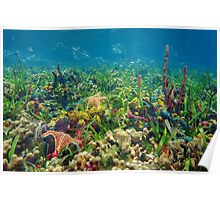 Thriving underwater marine life on tropical seabed Poster