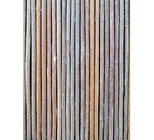 Old Bamboo  Photographic Print