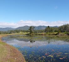 Reflections & Lilypads on Lake Clarrie Hall, hinterland, Kingscliff.  by Rita Blom