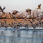 The Migration by PGornell