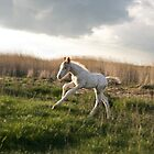 Newborn foal galloping by Andrew Lever