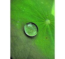 Droplet Photographic Print